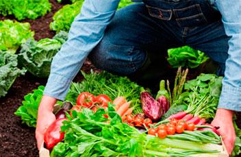 Cultivos agroecologicos